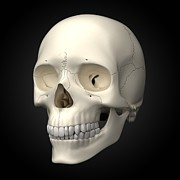 Human Joint Art - Human Skull, Artwork by Visual Science