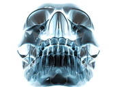 Human Skull, Computer Artwork Print by Robert Brocksmith