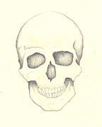 Human Skeleton Drawings - Human Skull by Johanus Haidner
