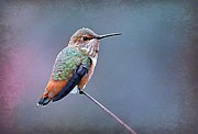 Tiny Bird Photos - Hummer Art 3 by Fraida Gutovich