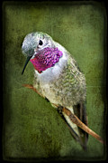 Ruby-throated Hummingbird Photos - Humminbird At Rest by Susan Candelario