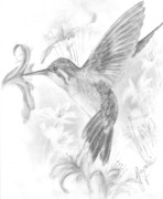 Angelic Drawings - Humming Bird by Gayatri Ketharaman