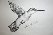 Stippling Framed Prints - Humming Bird Framed Print by Matthew Wright