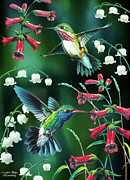 Home Decor Painting Framed Prints - Humming Birds 2 Framed Print by JQ Licensing