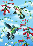 Hummingbird Painting Prints - Humming Birds Print by JQ Licensing