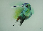Puppy Mixed Media Originals - Hummingbird 1 by Arunabha Sengupta