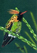 Hummingbird Drawings Metal Prints - Hummingbird 4 Metal Print by Sherri Strikwerda