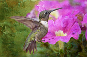 Ruby Throated Hummingbird Framed Prints - Hummingbird and Petunias Framed Print by Bonnie Barry