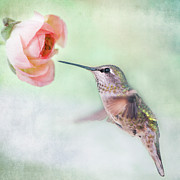 One Animal Prints - Hummingbird And Ranunculus Print by Susan Gary