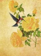 Fauna Pyrography Acrylic Prints - Hummingbird and Rose Acrylic Print by Selina Jackson