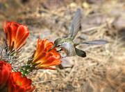Saija  Lehtonen - Hummingbird and the Hedgehog