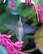 Hummingbird Originals - Hummingbird Angel by Peter Gray