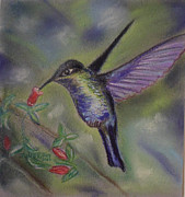 Hummingbird Pastels Framed Prints - Hummingbird at Work Framed Print by Julie Brugh Riffey