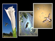 Joyce Dickens - Hummingbird Collage 2009