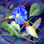 Morning Glory Art - Hummingbird Delight by Bonnie Rinier