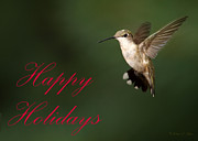 Avian Greeting Cards Posters - Hummingbird Holiday Card Poster by Sabrina L Ryan