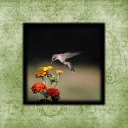 Tiny Bird Prints - Hummingbird I Photo Square Print by Jai Johnson