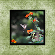 Tiny Bird Photos - Hummingbird II Photo Square by Jai Johnson