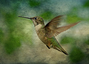 Ruby-throated Hummingbird Posters - Hummingbird in Flight II Poster by Sandy Keeton
