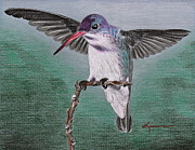 Hummingbird Drawings Metal Prints - Hummingbird Metal Print by Kume Bryant