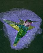 Lavender Drawings Originals - Hummingbird by Mary Tuomi