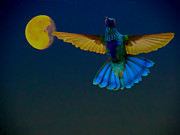 Beat Photos - Hummingbird Moon by Al Bourassa