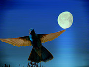 Beat Photos - Hummingbird Moon II by Al Bourassa