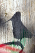 Laura Mountainspring - Hummingbird Shadow...
