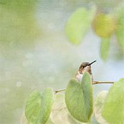 Compostion Art - Hummingbird Taking in the Gorgeous Green View by Susan Gary