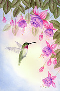 Leona Jones Posters - Hummingbird with Fuchsia Poster by Leona Jones