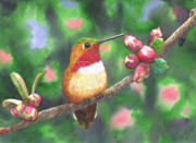 Hummingbird Painting Prints - Hummy Print by Catherine G McElroy