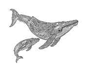 Humpback Drawings Posters - Humpback and Calf Poster by Carol Lynne