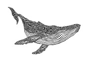 Whale Drawings Metal Prints - Humpback Metal Print by Carol Lynne