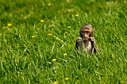 Baby Animal Photos - Hungry Monkey by Justin Albrecht