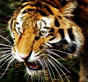 Tiger Fractal Framed Prints - Hungry Tiger Framed Print by Darleen Stry