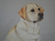 Labrador Retriever Pastels - Hunter by Teresa LeClerc