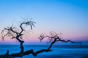 Hunting Island Sunrise I Print by David Waldrop