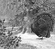 Wildfowl Prints - Hunting: Wild Turkey, 1886 Print by Granger