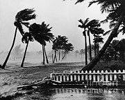 Floods Posters - Hurricane In Palm Beach Poster by Omikron
