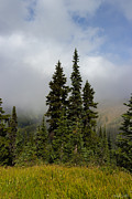 Hurricane Ridge Beauty Print by Heidi Smith