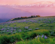 Lush Colors Posters - Hurricane Ridge Poster by Crystal Garner
