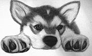 Puppies Drawings Posters - Huskie Pup Poster by Susan Barwell