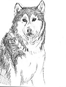 Husky Drawings Metal Prints - Husky Metal Print by Charme Curtin