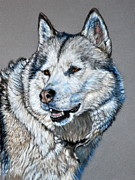 Siberian Husky Paintings - Husky by Louise Charles-Saarikoski