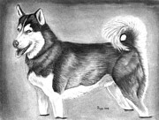 Husky Drawings Metal Prints - Husky  Metal Print by Russ  Smith