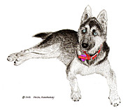 Huskies Drawings Prints - Husky with blue eyes and red collar Print by Jack Pumphrey
