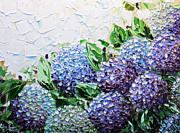 Artist Christine Krainock Framed Prints - Hydrangea at Daybreak Framed Print by Christine Krainock