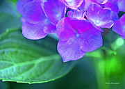 Kay Lovingood Art - Hydrangea by Kay Lovingood