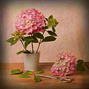 Textured Floral Prints - Hydrangea Pink Flower Print by Ian Barber