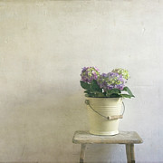 Hydrangea Posters - Hydrangea Resting On Stool Poster by Paul Grand Image